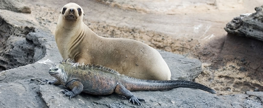 iguana and seal